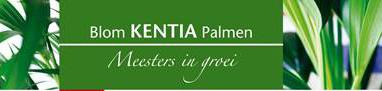 Blom Kentia Palmen